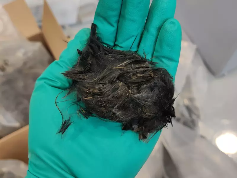 Carbon fibres extracted from vertical tail plane after the resin has been removed